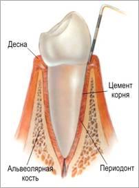 Строение тканей зуба