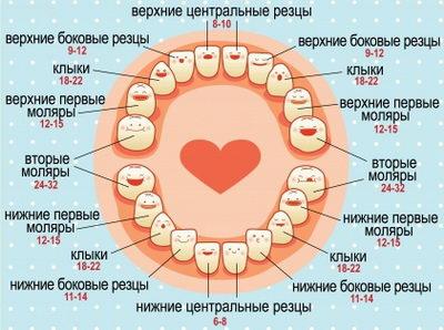 Сроки прорезывания зубов